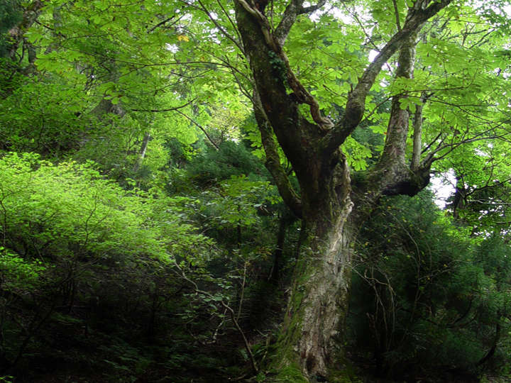 京都北山ハイキング 小野村割岳