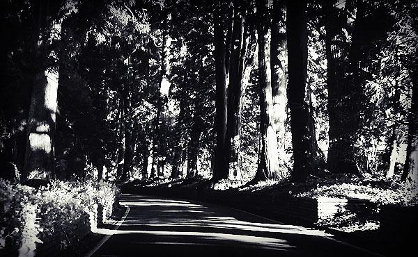 日光例幣使街道の杉並木