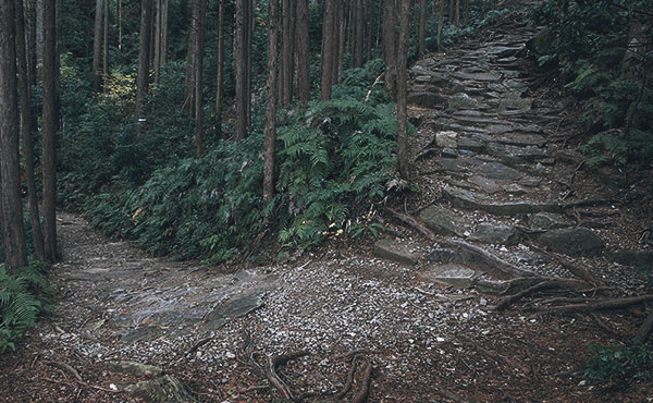 最悪の状況を招かないためのハイキングのトラブルの原因と対策
