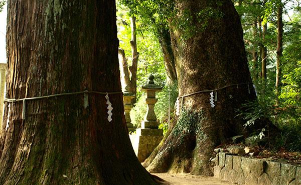 山が多い島国日本で巨樹の森は地球と人間をつなぐ神経のようなもの