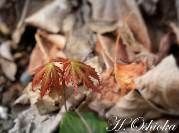 春の森で・・・