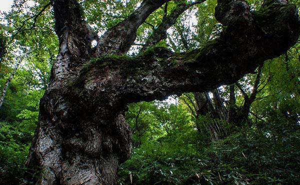 巨樹みる自然崇拝と人間の本質について・・・