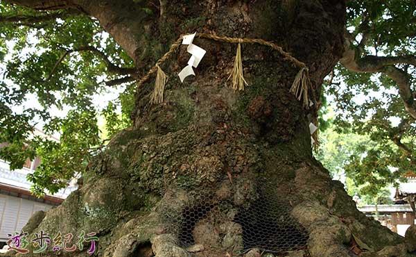 神服神社のヤマモモ2
