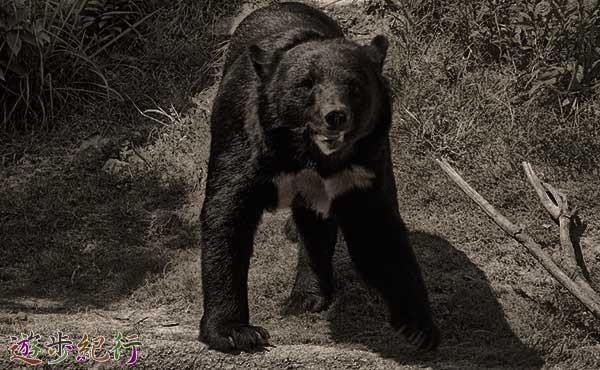 熊出没注意!熊に遭遇しないための決まり事