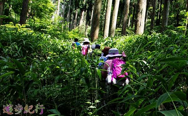 山の危険な虫から身を守る方法(1)