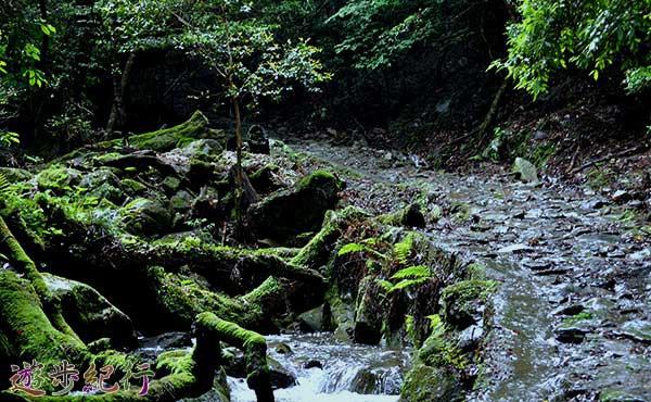 剣豪が刻んだ磨崖仏を探しながら奈良の剣豪の里を歩く柳生街道「滝坂の道」