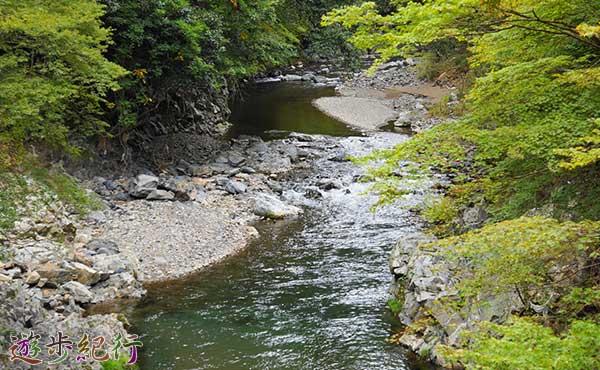 京都で人気のハイキングコースで家族がスズメバチに刺される被害発生
